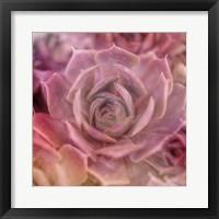 Framed Succulents 04