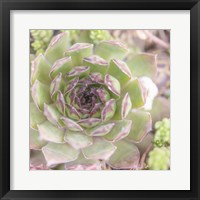 Framed Succulents 09