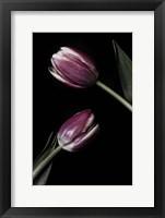 Framed Two Tulips