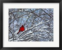 Framed Cardinal in the Snow