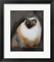Framed Birman Cat