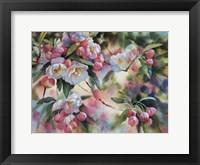 Framed Crab Apple Blossoms I