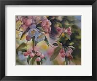 Framed Crab Apple Blossoms II