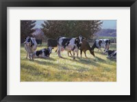 Framed Dairy Cows