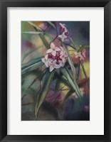 Framed Daphne