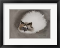 Framed Fluffy White Cat