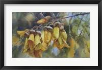 Framed Kowhai Tree Blossoms I