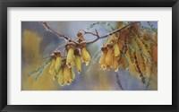 Framed Kowhai Tree Blossoms II