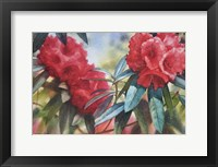 Framed Red Rhodo