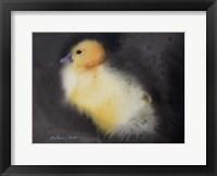 Framed Ugly Duckling