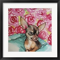 Framed Lola Chihuahua