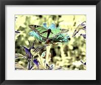 Framed Green Monarch