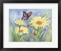 Framed Butterfly Daisy
