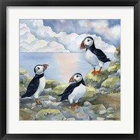 Framed Puffins on Cliff