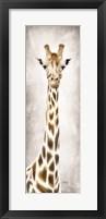 Framed Geri the Giraffe