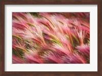 Framed Foxtail Barley II