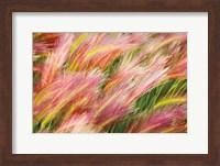 Framed Foxtail Barley I