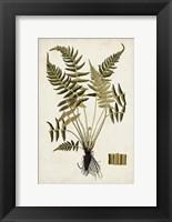 Framed Fern Botanical IV