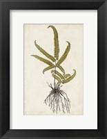 Framed Fern Botanical VI