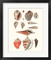 Framed Shell Collection IV