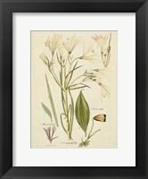 Framed Antique Botanical Sketch I