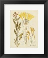 Framed Antique Botanical Sketch IV