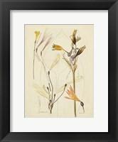 Framed Antique Botanical Sketch VI