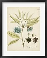Eloquent Botanical III Framed Print
