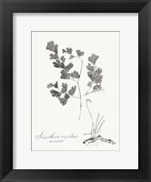 Framed Botanical Imprint I