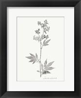 Framed Botanical Imprint II