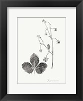 Framed Botanical Imprint IV