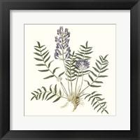 Framed Graceful Botanical I