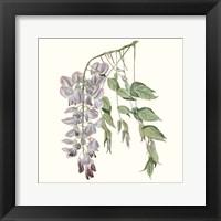 Framed Graceful Botanical II