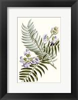 Framed Graceful Botanical IV