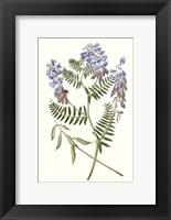 Framed Graceful Botanical V
