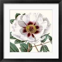 Framed Cropped Antique Botanical II