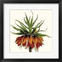 Framed Cropped Antique Botanical V