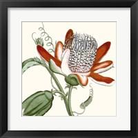 Framed Cropped Antique Botanical VI