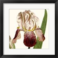 Framed Cropped Antique Botanical VIII