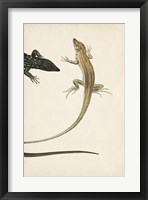 Framed Lizard Diptych II