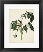 Framed Antique Foliage & Fruit II