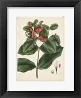 Framed Antique Foliage & Fruit IV
