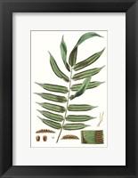 Framed Fern Foliage I