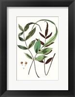 Framed Fern Foliage II