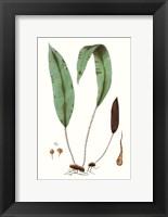 Framed Fern Foliage III