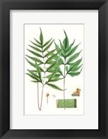 Framed Fern Foliage IV