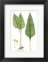 Framed Fern Foliage VI