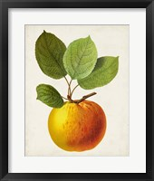 Framed Antique Fruit I