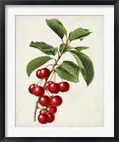 Framed Antique Fruit II