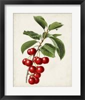 Antique Fruit II Framed Print